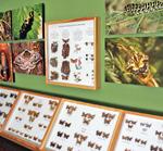 Naturkundliches Kabinett - Schmetterlinge, Käfer und Pflanzen des Siegerlandes
